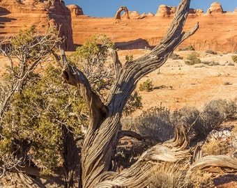 Delicate Arch, Arches National Park, Utah, Desert, Photography, Wall Art