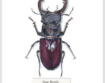 Stag Beetle - Print - Original Acrylic Painting - 15.6 x 15.6cm
