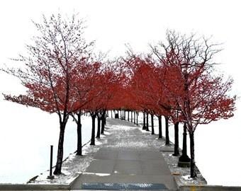 The Path // WOOD PRINTS//Large Canvas Prints//Metal Prints//Wall Art//Photographic Prints