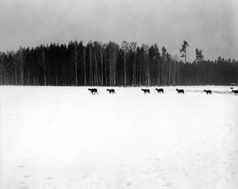 Silence In The Winter- Black and White Photography, Nature, B&W Art Print, Animals, Magic, Medium Film Camera