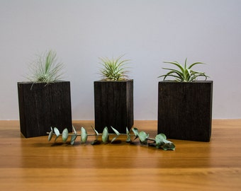 Charred Hardwood Air Plant Cube