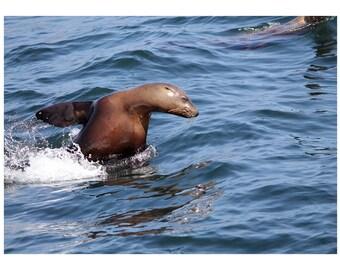 Happy Sea Lion Greeting Card