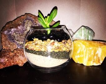 Preassembled Plant Terrarium!