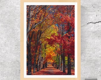 Trees, Trees Print, Trees Poster, Trees Wall Decor, Road, Road Print, Road Poster, Colorful Road, Trees Photography, Printable Art