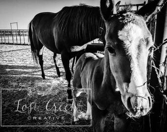 Horse Photography, Black and White, Ranch House Rustic Wall Art - Hello There