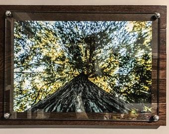 Hardwood and Polished Glass Floating Frame Photograph.