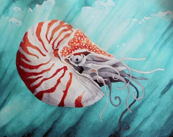 Chambered Nautilus Print - Ocean Themed Biology Art, Marine Biology, Biology Gift, Biology Teacher Gift, Scientific Illustration, Science