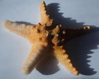 Crystallized starfish REAL