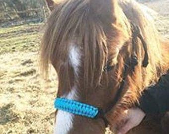 Handmade Rope Halters with Coloured Nosebands