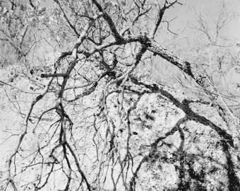 Oak, Gorges of Opedette, draw black and white film to the enlarger.