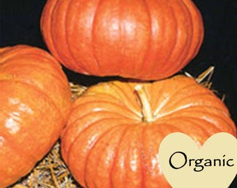 Pumpkin  Cinderella Organic Non-GMO, 6 Organic seeds, Cinderella's Pumpkin, Organic garden Seeds, Vegetable Seeds, Organic gardening seeds