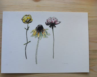 Wildflowers, watercolour and ink