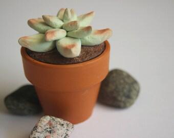 Potted Succulent Cactus Home Decor Handmade Clay Desk Decoration Pot