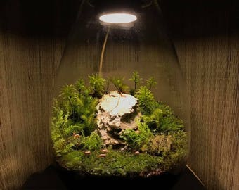 Moss Terrarium Light LED (Full Spectrum White)