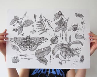 Nature Collection Print A3 Fineliner