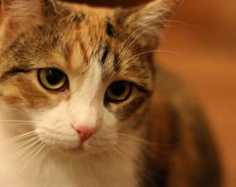 Cari the Cat Postcard