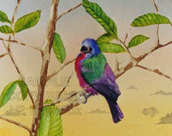 Painted Bunting Watercolor Greeting Card by J. P. Haydock (also available as a fine art print)