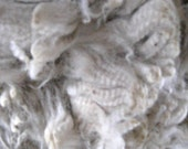 White Alpaca Fleece, Raw and Unwashed Fiber, 14 ounces for Spinning, Felting, Dyeing, Cirrus