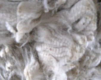 White Alpaca Fleece, Raw and Unwashed Fiber, 13 ounces for Spinning, Felting, Dyeing, Cirrus