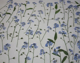 Dried Pressed Flowers for Crafting -  Natural Blue Forget-me-nots with Stem