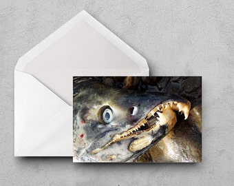 Toothy Salmon Greeting Card