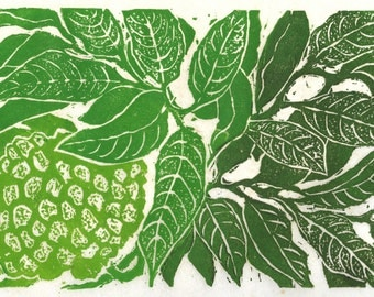 Custard Apple, limited edition linoleum block print, printed and signed in pencil by the artist