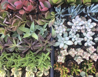 Succulent Plant Reservation - Reserve Succulents for Your Event