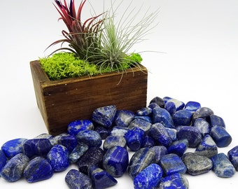 Tumbled Stones By the Ounce - LAPIS LAZULI - (An)