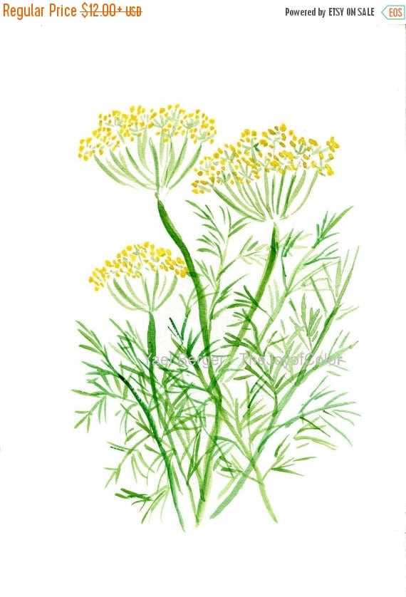 Holiday sale Dill art  print, Dill watercolor painting, Herb print,  Plants print, Botanical herb art, kitchen decor, foodie gift, mothers d