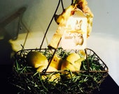 Spring Easter Basket nest with Eqster eggs in chicken wire basket