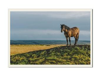 Icelandic Horse - Photographic Print by Doug Armand on Etsy