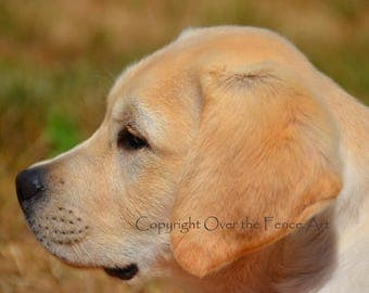 Dog Greeting Card Yellow Labrador Portrait
