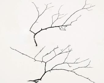 2 branches in snow, 8x10 fine art photograph, nature