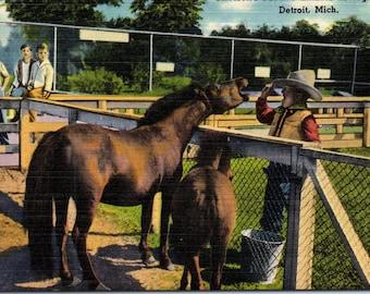 Detroit, Michigan, Zoo, Petting Zoo, Horses - Linen Postcard - Postcard - Unused (WWW)
