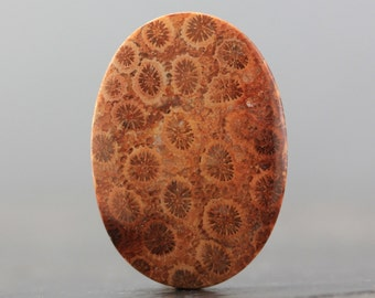 CLEARANCE Oval Fossilized Coral Agatized Fossil Specimen Cabochon Pendant Petoskey Stone Cabachon for Designs, Healing (CA6505)
