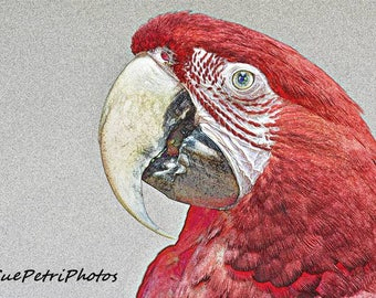 Macaw Photograph, Greenwing Macaw, Fine Art Photograph, Animal Photography, Bird Photos, Red Parrot, Parrot Greeting Card, Parrot Magnet