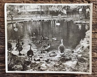 Original Vintage Photograph The Duck Pond
