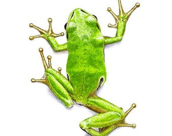 Signed tree frog print - small (HA03)