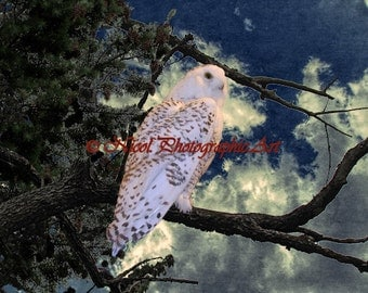 Snowy Owl Bird Tree Blue White Country Home Decor Art Photo Matted Picture A127