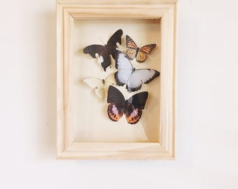 Spring mix Faux Butterfly shadow box 5x7