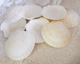 """EIGHT Vintage Luau Baking Shells, Large 6"""" Clam Shells, Bake and Eat Right Fom the Shell, Lobster, Shrimp, Individual Meat Loaf, Sea Shells"""