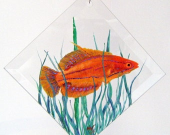 Hand Painted Glass Ornament - McCoskers Wrasse