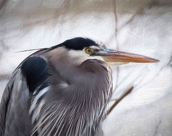 Great Blue Heron Image, Nature Photo, Heron Photo, Bird Photography