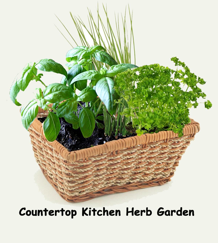 Indoor Kitchen Herb Garden Kit Herb Kitchen Garden Kit Everything Needed For Indoor Growing