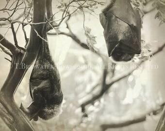 Bat Canvas Art, Nature Photography, Wildlife Photography, Art on Canvas, Cute Bat Print, Animal Print, Black and White Home Decor, Wildlife