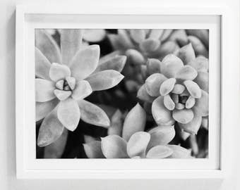 Succulent Art Prints, Printable Succulent Art, Plant Photography, Download Plant Art, Succulent Wall Prints, Black and White Succulent Art