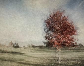 Nature Print, Abstract, Dreamy, Landscape Photo, Autumn Trees, Fall Leaves, Rust, Blue, Green, Modern, Wall Art, Bedroom Art, Office Art
