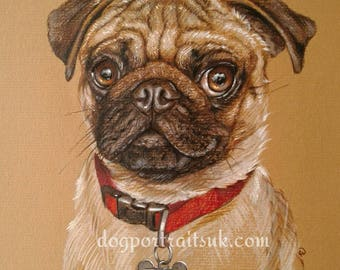 Pug pet portrait, custom hand drawn dog portrait from photos