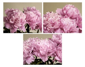 Peony prints, peony wall art, pink flower peony photography print set of 3 peony prints, french country decor, cottage chic floral pictures
