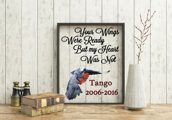 Pet Memorial Frame, Your wings were ready quote but my heart was not quote, African Grey Parrot Frame, Loss of Pet frame, Pet Portrait